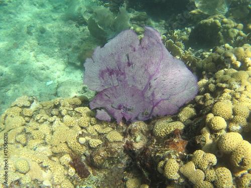 Obraz na dibondzie (fotoboard) gorgone