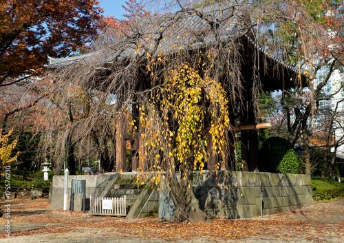 Zdjęcie XXL Jesień park z dzwonnicą w buddyjskiej świątyni Zojoji w centrum Tokio, Japonia
