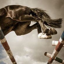 A Strong Black Horse Is Jumping Over The Barrier