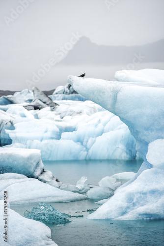 Plakat Góry lodowe pływające w lagunie Jokulsarlon w Islandii.