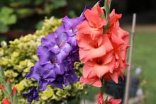 Head Of  Gladiolus Flower In S...