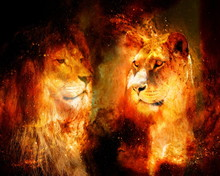 Lion And Lioness In The Cosmic...