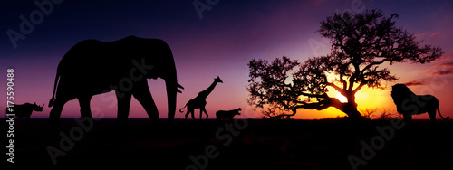 Foto op Canvas Afrika Famous african animals sunset silhouettes
