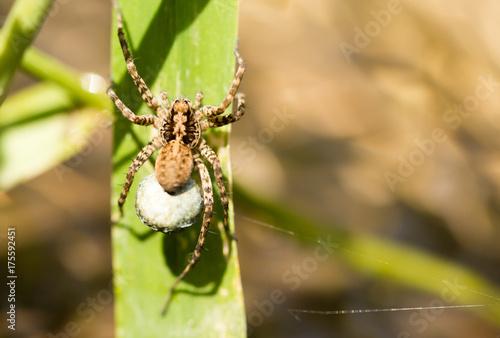 Plakat pająk w naturze
