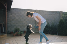 Young And Beautiful Girl Playing With Dog In Garden. Woman With Her Pet Zwergschnauzer.Miniature Schnauzer