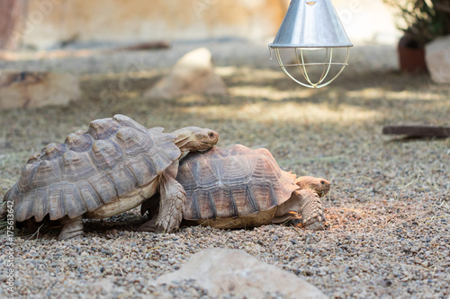 Fotomural Secret life of turtles