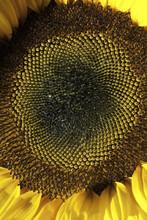 Closeup Microphotograph Macro ...