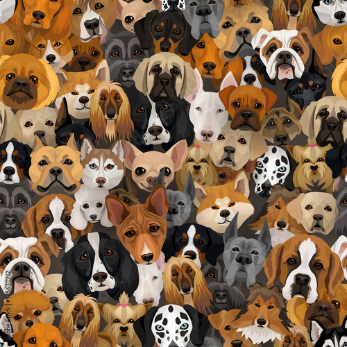 plakat Vector dogs different breeds seamless pattern or wrapping paper 2018 year of dog background with husky, dolmatian, bulldog, schnuzer, spaniell and other breeds