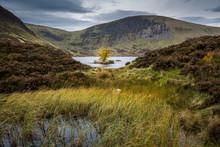 Lone Tree In Loch Skeen