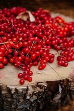Viburnum Berries