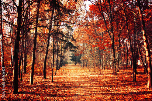 Foto op Canvas Baksteen Autumn nature landscape. Walkway in the forest in fall.
