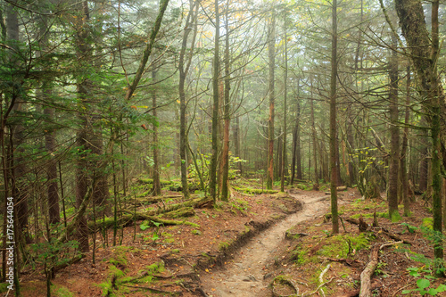 Fotografering A trail winds through Great Smoky Mountains National Park