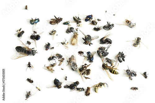 Fotografie, Tablou  Dead insects