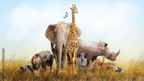 Spoed Fotobehang Afrika Safari Animals in Africa Composite