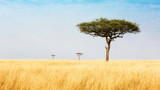 Fototapeta Sawanna - Trees in Grasslands of Kenya Africa