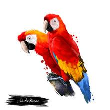 Scarlet Macaw Digital Art Illu...