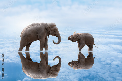 Zdjęcie XXL 2 słonie na wodzie.