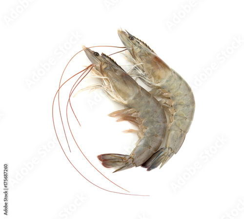 Shrimp. Isolated on white background.