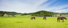 北海道 サラブレッド 競走馬 放牧風景