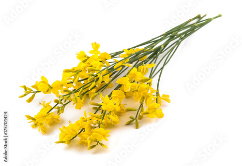 Yellow Broom Flowers Buy This Stock Photo And Explore Similar