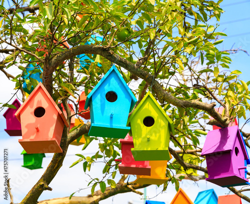 Closeup view birdhouses on a mandarin tree Canvas Print