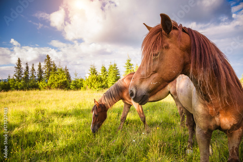 Photo  Dirty horses grazing in the pasture that is illuminated by the sun