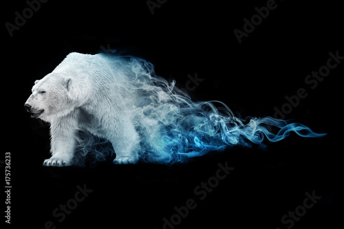 Poster Ijsbeer polar bear animal kingdom collection with amazing effect
