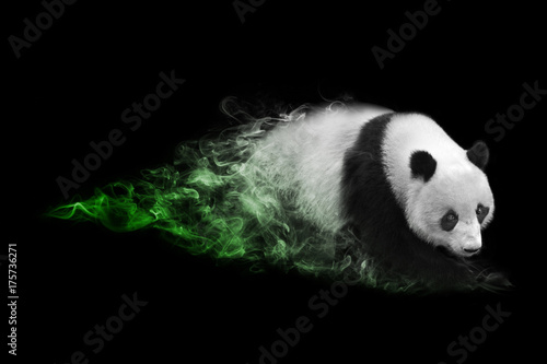 Aluminium Prints Panda Panda animal kingdom collection with amazing effect