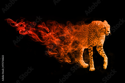 Fotografia, Obraz Cheetah animal kingdom collection with amazing effect