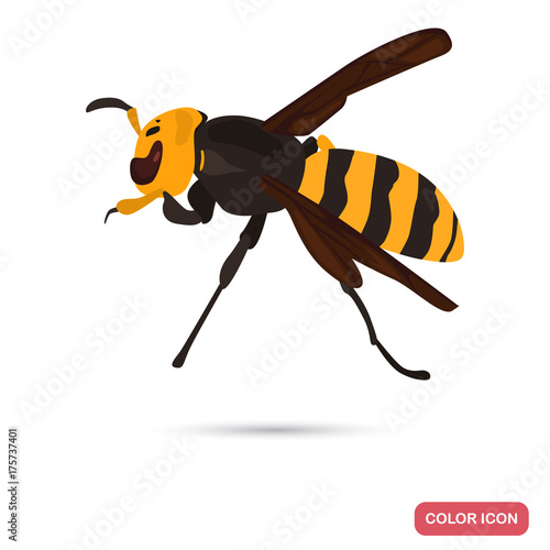 Valokuva Azian wasp color flat icon for web and mobile design