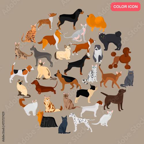 zbior-roznych-kotow-i-psow-rodzi-kolor-plaskie-ikony