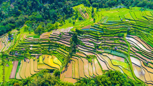 Garden Poster Rice fields Rice terraces. Bali, indonesia.