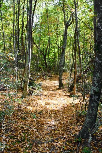 Shenandoah National Park - Appalachian Trail - Virginia 006 Canvas-taulu