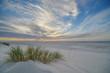 canvas print picture - Strandhafer im Sonnenuntergang III