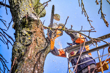 Tree Pruning And Sawing By A M...