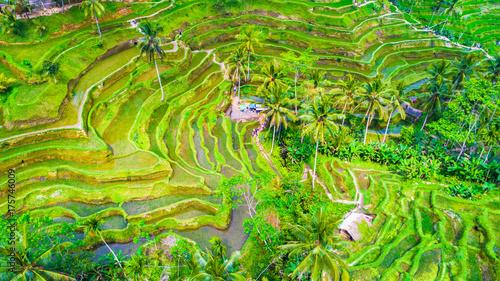 Foto auf AluDibond Lime grun Rice terraces. Bali, indonesia.