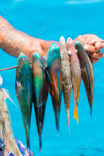 Harpoon fishing in French Polynesia, colorful fishes, parrot fishes on the arrow Billede på lærred