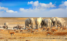Colourful Vibrant Waterhole Scene In Etosha With Many Animals And Beautiful Blue Cloudy Sky. Namibia, Southern Africa