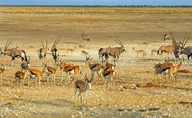 Large group of Gemsbok oryx and impala on the dry plains in Etosha, Namibia