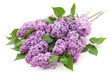 Bouquet of lilac.