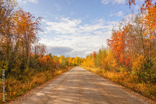 Foto op Aluminium Oranje Autumn landscape: road, colorful trees and blue sky