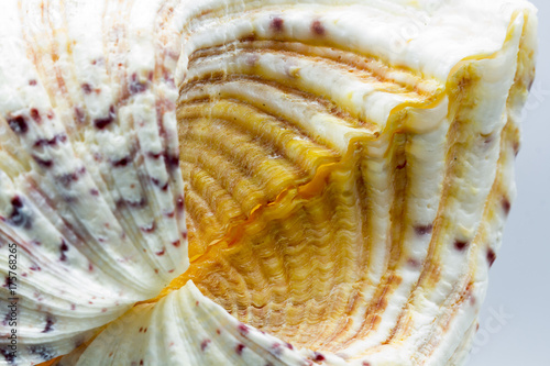 Seashell colors and texture