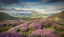 Upland Heathland Landscape At ...