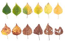Autumn Concept, Age Changes Of...