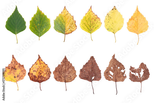autumn concept, age changes of leaves, aging stages, the birth death, drying, ti Wallpaper Mural
