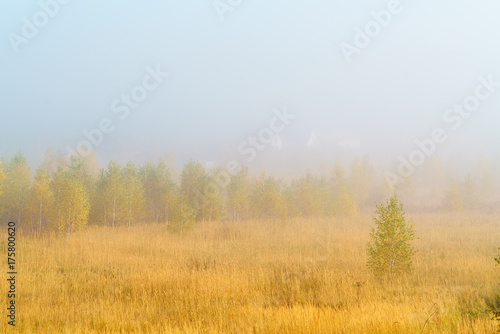 Staande foto Honing Autumn landscape with yellow grass in the field, birch and smoke