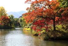 Autumn Leaves Of Sapporo Park Autumn Leaves Of Japanese Garden