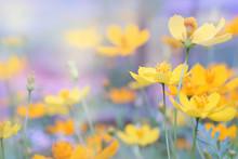 Close Up Beautiful Yellow Flow...