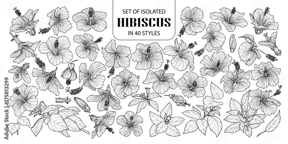 Fototapety, obrazy: Set of isolated hibiscus in 40 styles. Cute hand drawn vector illustration flowers in white outline and black plane.