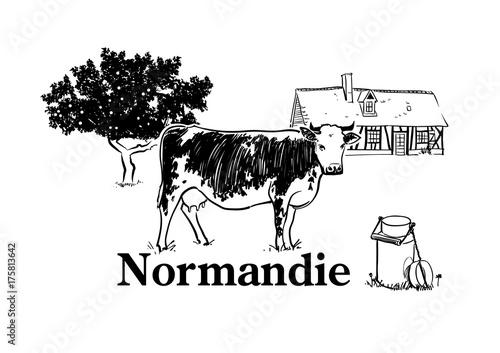 Photo Vache de Normandie